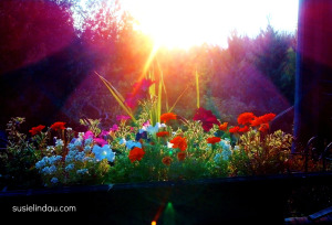 Flower box in setting sun. Time seems to fly as seasons change. Learn how to slow it down.