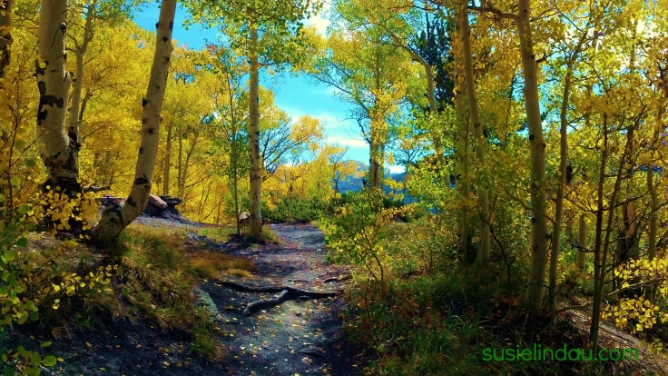 golden trail in fall