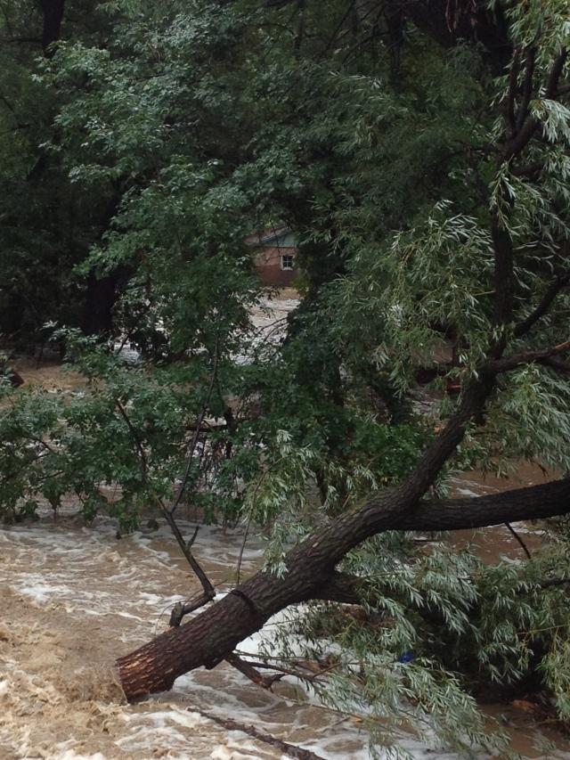 Courtney Lindau - Boulder Creek