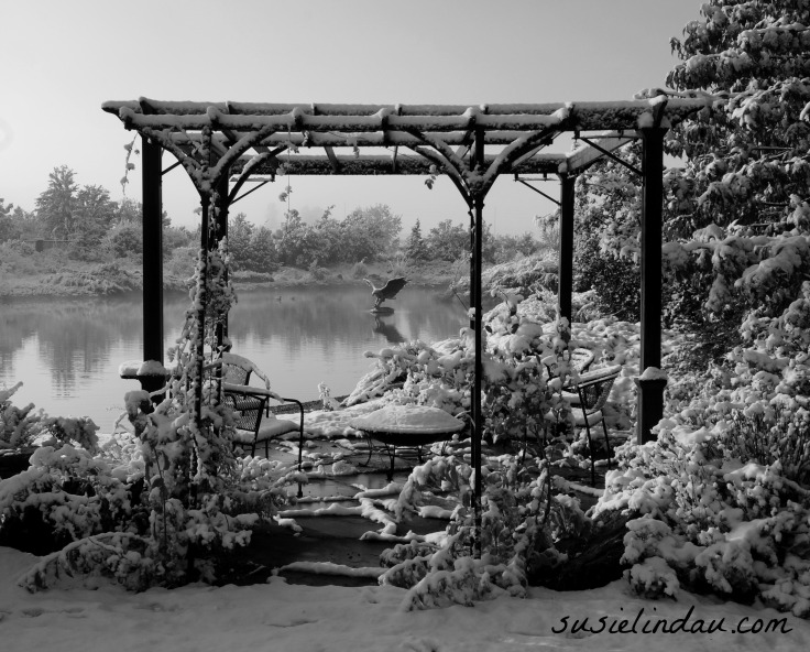 Black and white - snowy day