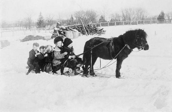 pony and children