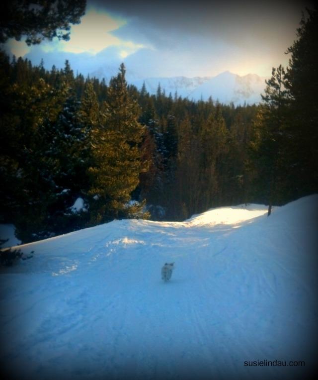 Snowshoeing 6