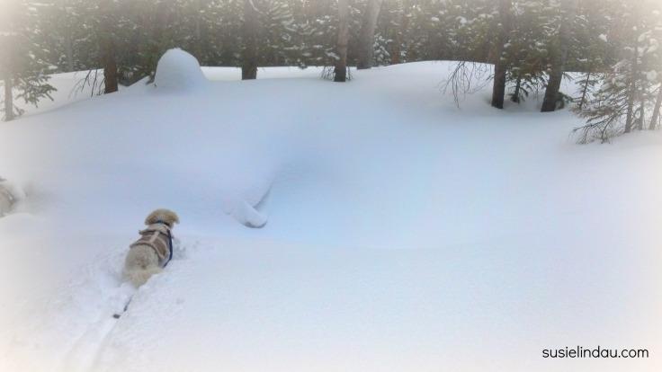 snowshoeing 7