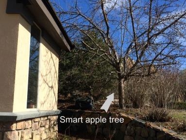 smart apple tree