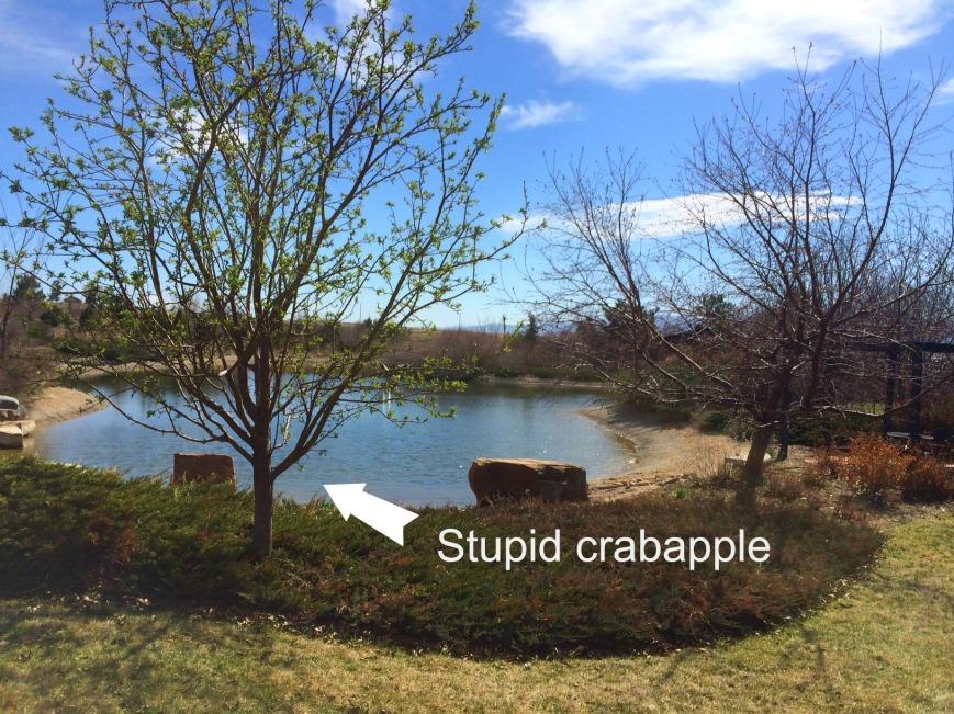 stupid crabapple