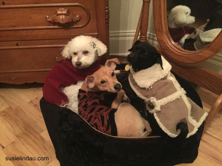 three pups in a tub