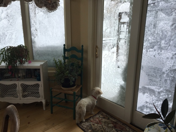 dog looking outside at snow falling