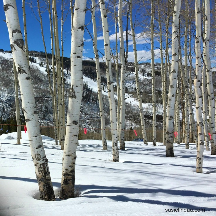 Aspens in Beaver Creek