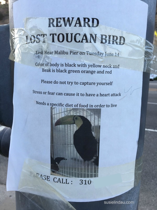 Lost toucan sign in Malibu, California with warning of biting.