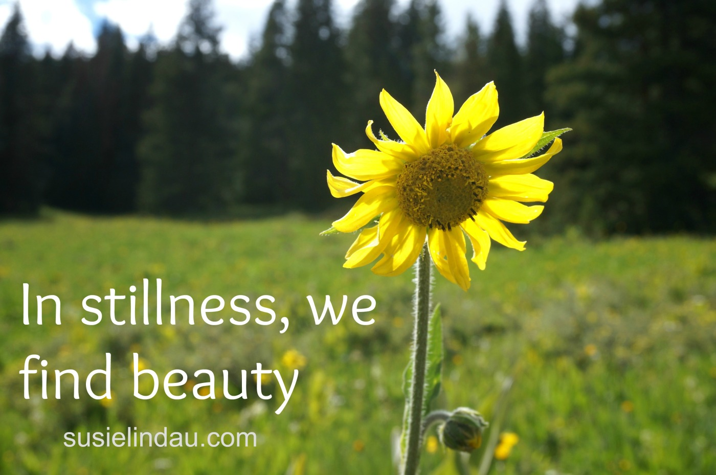 In stillness we find beauty poster with yellow flower