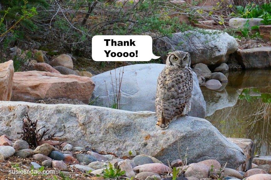 Owl Thanks You