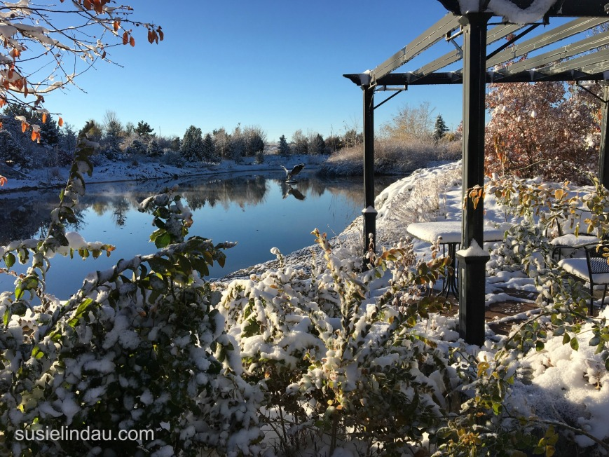 November first snow on the pond
