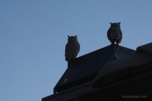 Owls on the roof - Resolution failures
