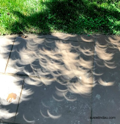eclipse leaf patterns from tree