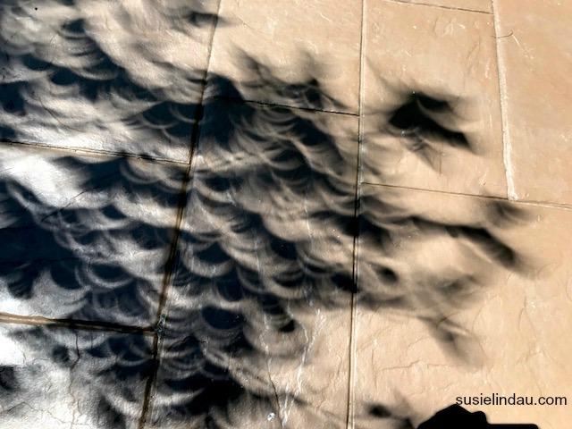 Eclipse leaf patterns