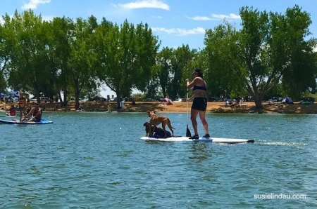 Paddleboarding with Dogs