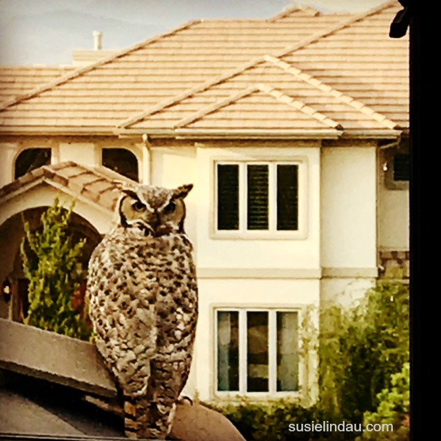 owl hanging out on roof
