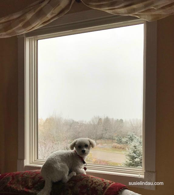 Roxy in the window