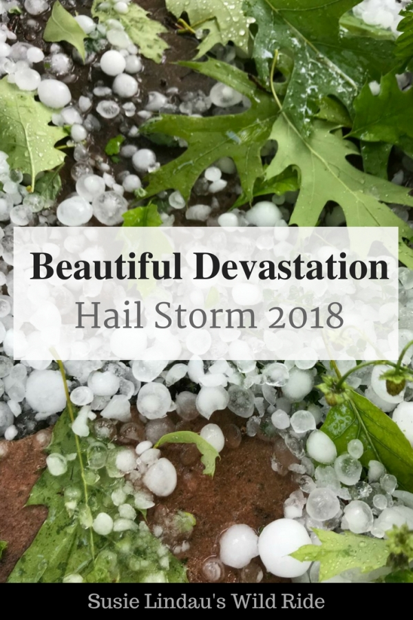 Beautiful Devastation Hail Storm 2018, hail amongst leaves on ground, weather, outdoors, nature, beauty, photography