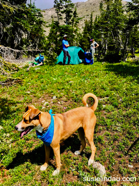 Setting up camp on Arapaho Pass, Courtney and Dan admire their progress while their dog, Lady looks on