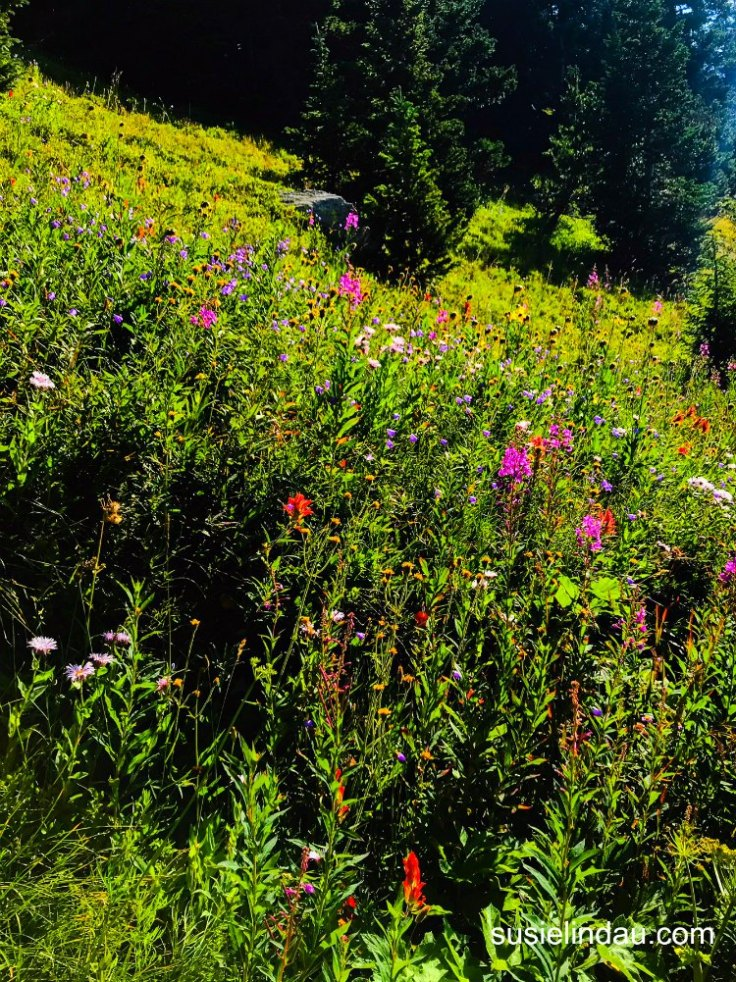 Wild Flowers on Fourth of July Trail