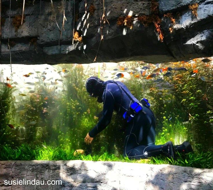 Volunteer at Denver Aquarium