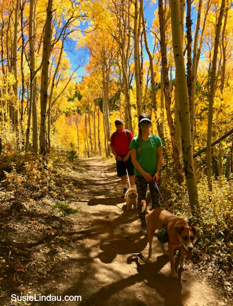 Hiking Aspen Alley in Breckenridge. Glorious fall color. Click for photos! Photography, Travel North America, Colorado, Travel tips, Travel United States #outdooradventures #photography #leafpeeping #fallcolor #autumn #colorado