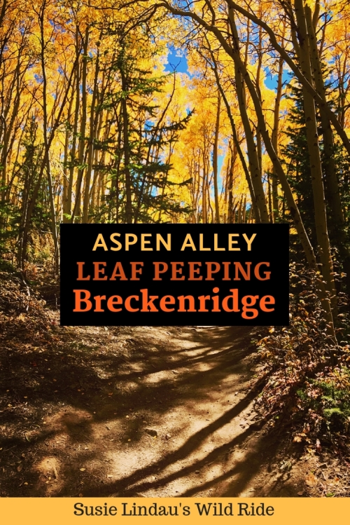 Aspen Alley Leaf Peeping in Breckenridge. Click for photos! Colorado Hikes, Outdoor Adventures, Fall color, Autumn, Travel North America, Travel tips, Travel United States, photography #travel #Colorado #Coloradohikes #outdooradventures #traveltips