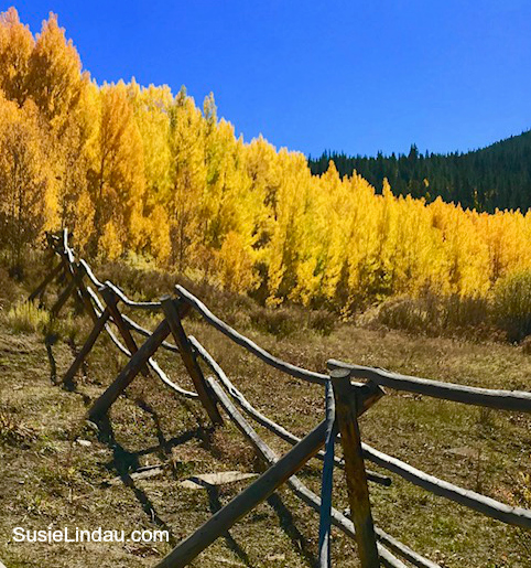 Aspen Alley Leaf Peeping in Colorado. Click for photos and add it to your bucket list! Travel North America, Travel tips, Fall, Autumn color, Colorado #Travel #colorado #leafpeeping #fallcolor #traveltips