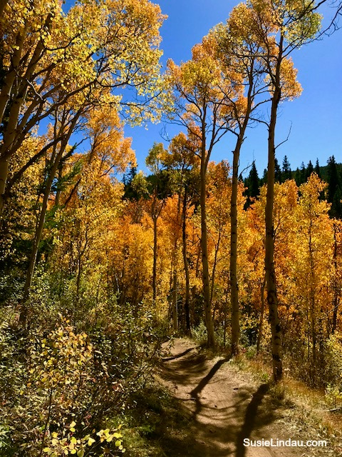 Aspen Alley in Breckenridge in full autumn color. Click for photos! Photography, Fall color, leaf peeping, Colorado, Travel North America, Travel United States, Colorado hikes #photography #Coloradohikes #Colorado #travel #traveltips #hiking