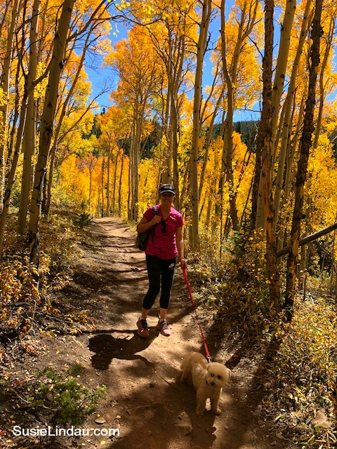 Aspen Alley in Breckenridge for amazing fall color. Click for photos! Outdoor adventures, Travel tips, Colorado, Travel North America, Photography #Colorado #traveltips #travel #outdooradventures #hiking