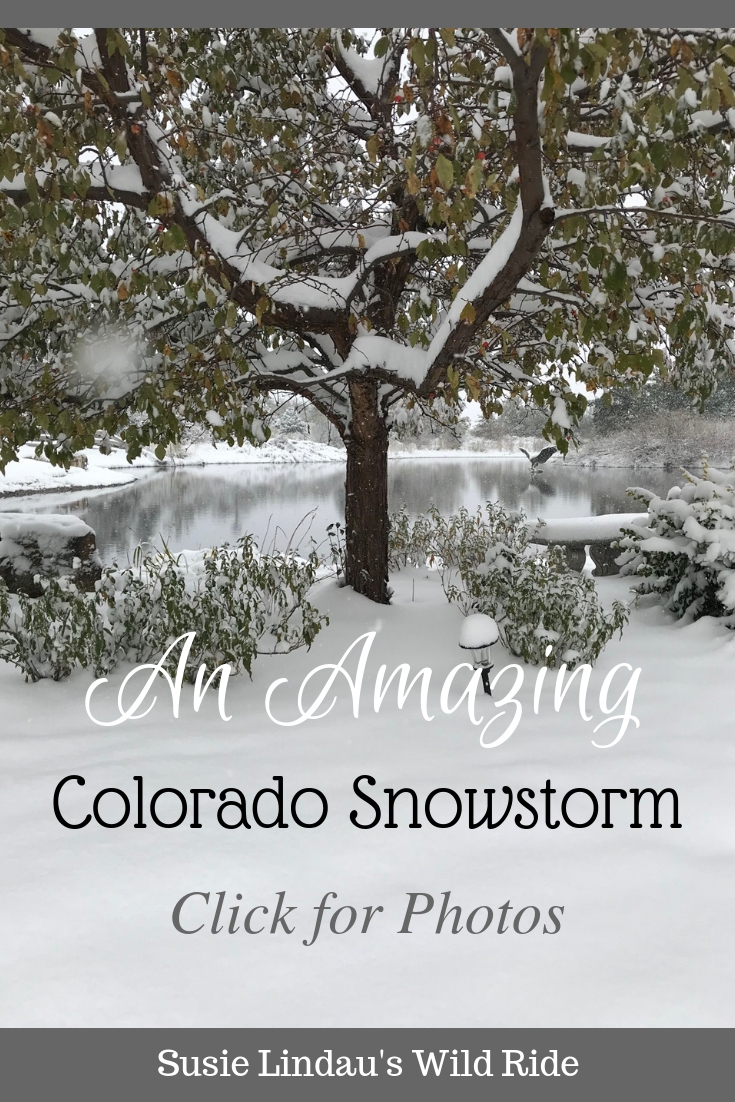 An Amazing Colorado Snowstorm: Click for photos! Outdoor adventures, Nature, photography, travel North America, Colorado, October #photograpy #nature #Colorado #travelnorthamerica #outdooradventures