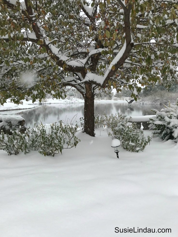 Colorado October Snowstorm coats pond and backyard in winter wonderland. Click for photos of this amazing storm! Photography, outdoor adventures, Boulder, Nature, Travel North America, #photography #nature #outdooradventures #travel #colorado