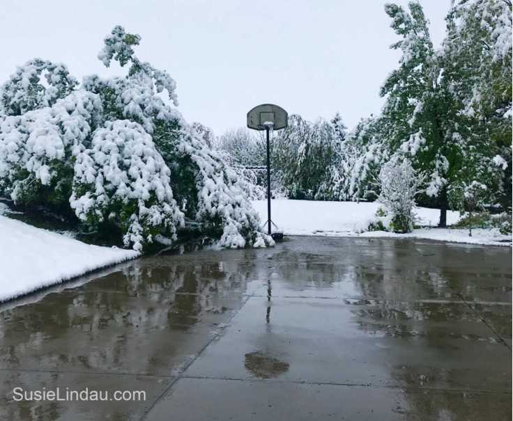 May Colorado Snowstorm of 2019! Click for phots of this devastating and beautiful storm.