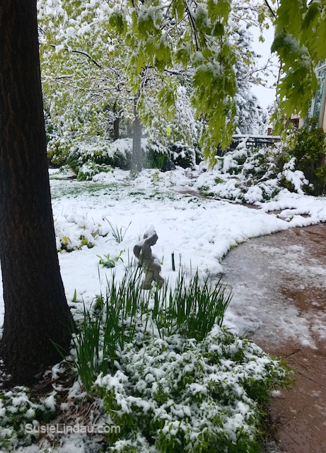 May Colorado Snowstorm of 2019! Click for some photos of Mother Nature's wrath in Boulder!