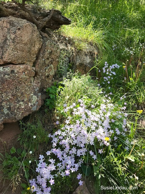 Wildflowers on Mount Sanitas