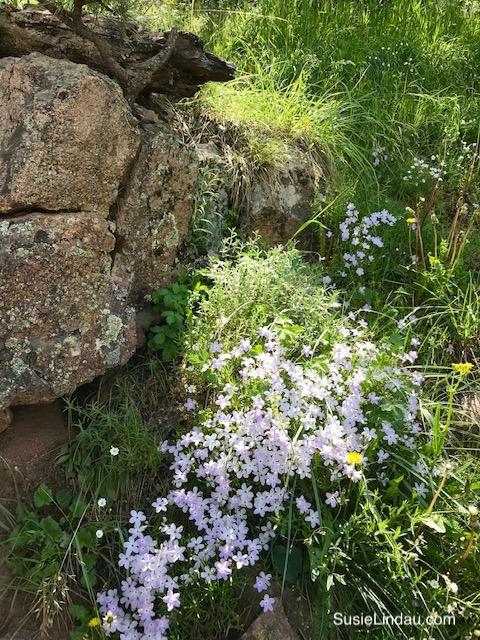 Wildflowers on Mount Sanitas