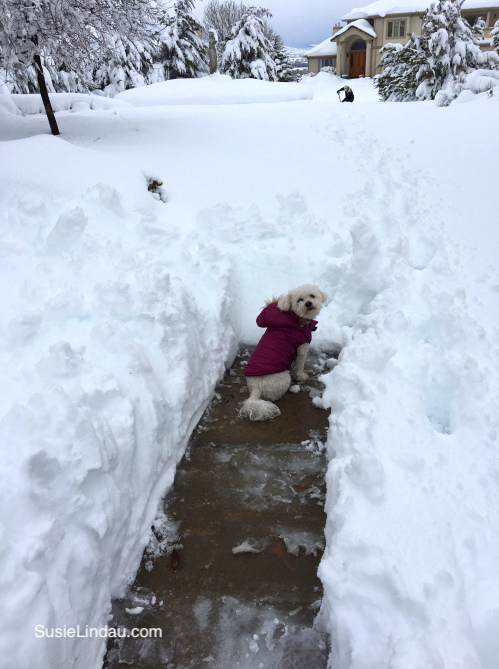 Early Winter in Colorado! Roxy is stuck in a maze of snow