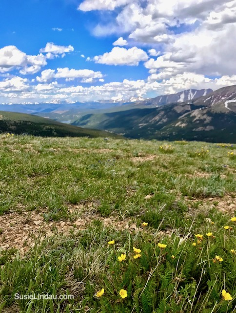 Flowers on Hoosier Pass. Click for photos of this amazing hike!