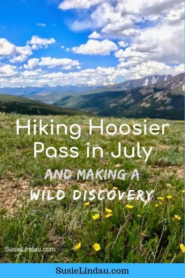 Hiking Hoosier Pass in July and Making a Wild Discovery! Click for photos of this amazing hike near Breckenridge, Colorado. #hiking #Coloradohikes #hikes #outdooradventures #Breckenridge