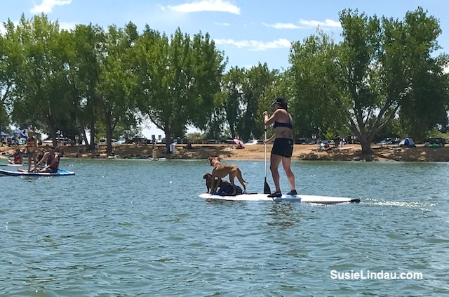 Paddle boarder with dogs on Union Reservoir. Click for my experience and how to paddle board with dogs! Paddle boarding | outdoor adventures with dogs | fun with pets#Colorado #paddleboard #paddleboarding #dogs #adventures #outdoor