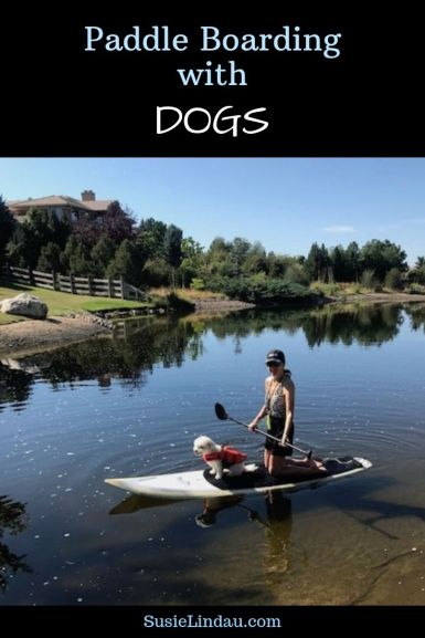 Paddle Boarding with Dogs! Click for what you need to make it an enjoyable experience! Paddle board | Dogs | Pets | fun with dogs | Outdoor adventures | Colorado #paddleboarding #paddleboardingdogs #paddleboardingwithdogs #dogs #Colorado