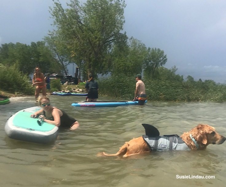 Shark life preserver on a paddle boarding dogs