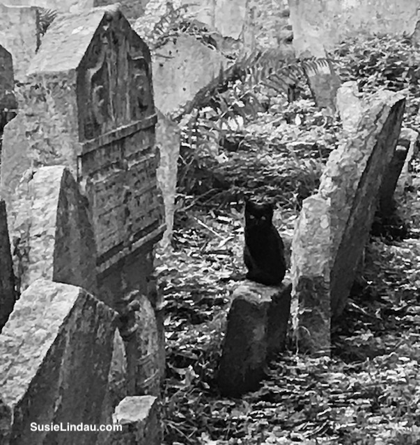 Black cat in a cemetery