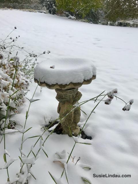 Snow covered bird bath
