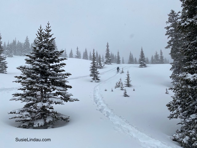 Colorado Snowy trail AT skiing with trees dotting the hill.