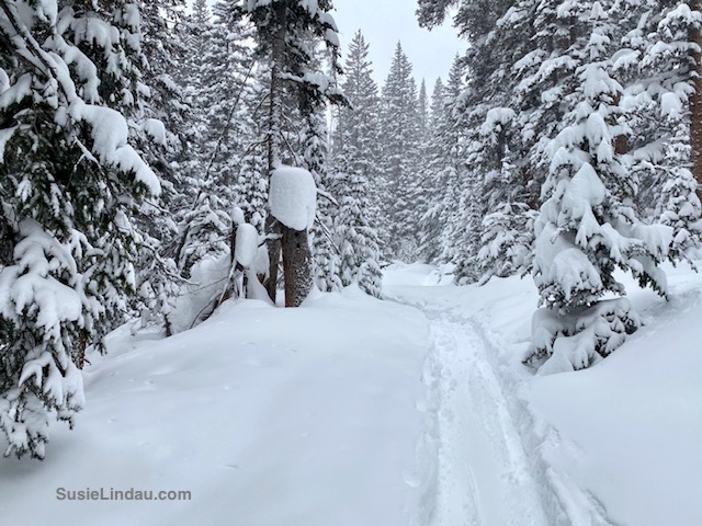 Winter trail in the woods near Francie's Cabin in Colorado