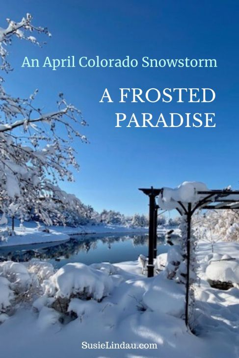 An April Colorado Snowstorm A Frosted Paradise Pinterest Pin