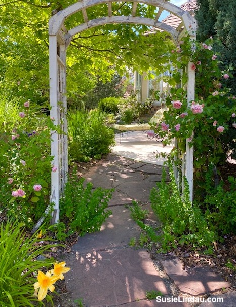 old trellis with roses on a garden path
