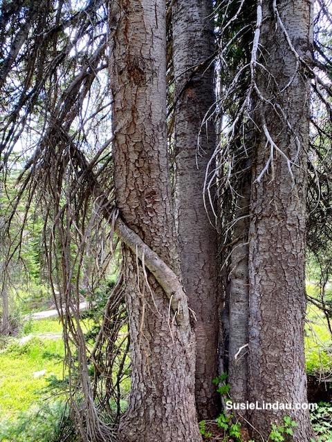A very strange branch